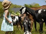 تاثیر گردشگری در اقتصاد کشاورزی