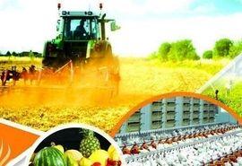 نشست هماهنگی بیمه محصولات کشاورزی ، باغی ودامی شهرستان فریدونشهر