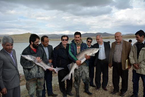 پرورش ماهی درقفس؛ فرصتی طلایی در عرصه آبزی پروری استان آذربایجان شرقی