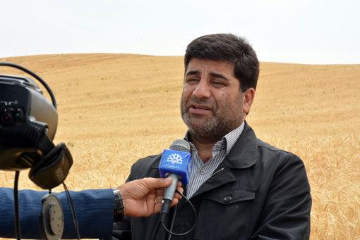 کشاورزان گندم خود را به دلالان نفروشند