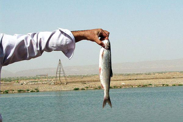 تولید 1300 تن ماهی در استخر ذخیره آب کشاورزی فارس