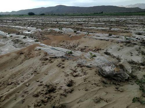 خسارت 474 میلیارد ریالی بارش بهاری به بخش کشاورزی قیروکارزین