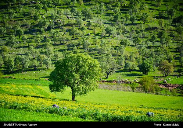 بهرهبرداری غیراصولی از مراتع همدان افزایش یافت