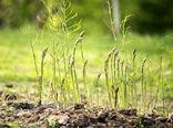 کاشت بذر درختان جنگلی و گیاهان مرتعی در فارس