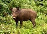 ۹۹ درصد شکار حیوانات حرام گوشت ایلام توسط غیربومیان انجام میشود