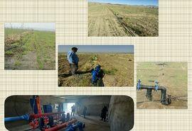 اجرای طرح آبیاری تحت فشار به روش مینی بابلر در سطح 33 هکتار از اراضی سربیشه