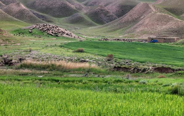 دام مازاد عامل اصلی کم آبی مراتع خراسان شمالی