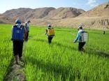 پیشبینی خرید  ۱۰۰ هزار تن انواع  کود مصرفی کشاورزان کردستانی