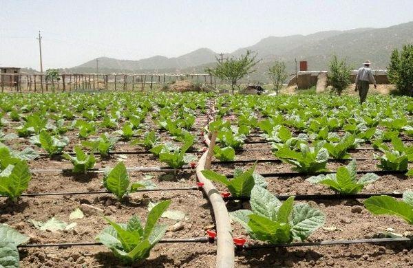 اجرای 200 طرح آب و خاک در اراضی کشاورزی استان تهران