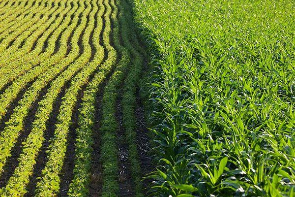 همکاری دانشگاه مینهسوتا امریکا با برزیل در زمینه بهرهوری مناسب و پایدار کشاورزی
