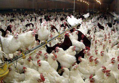 تجهیز ۱۶ استان کشور به امکانات تشخیص سریع بیماری آنفلوانزای پرندگان