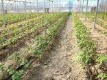 40 قطعه زمین گلخانهای به کشاورزان گرمه واگذار شد