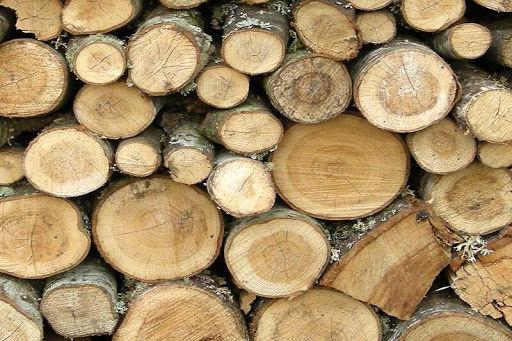 کشف ۹۴ تن چوب و زغال قاچاق در چهارمحال و بختیاری