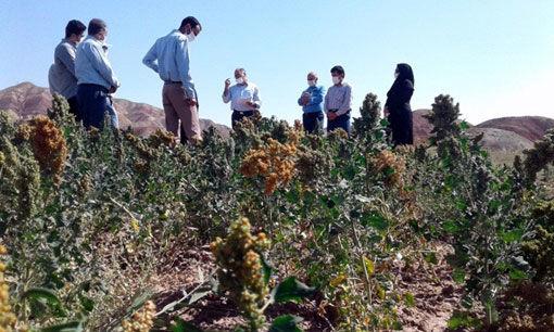 برگزاری کارگاه آموزشی-ترویجی ایجاد مزرعه کینوآ