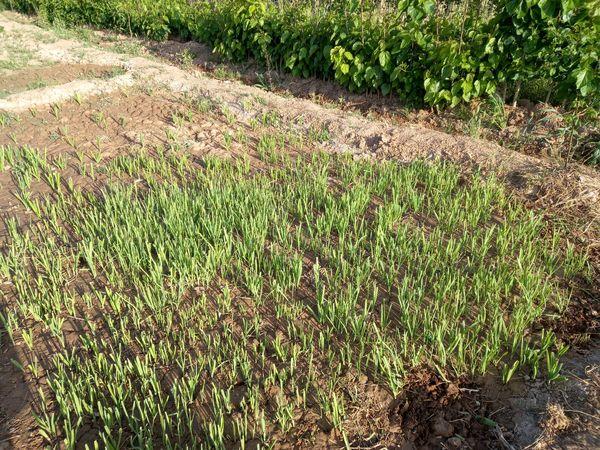۴ سایت کشت سبزیجات سالم در قالب باغچههای خانگی سلامت