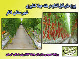 یک واحد گلخانه هیدروپونیک در شهرستان انار در هفته جهاد کشاورزی به بهره برداری می رسد