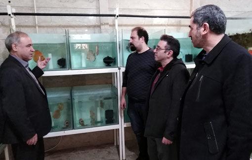 تکثیرو پرورش سالانه 200هزار قطعه ماهی زینتی دیسکاس در آذربایجان شرقی