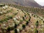 ۳۰ هزار هکتار به پوشش جنگلی کشور اضافه شد