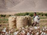 کارخانه های پنبه به اتحادیه تعاونی های کشاورزی پنبه و دانه های روغنی واگذار شود