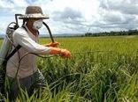 حذف آفات؛ افزایش تولید محصولات کشاورزی را به ارمغان میآورد