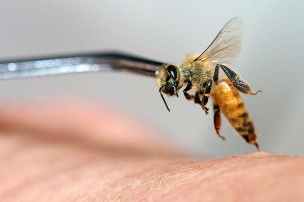 اعلام نظر یک مرجع علمی زنبورعسل از تاثیرات آپیتراپی بر بیماری ام اس و کرونا- کووید 19
