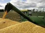 خرید تضمینی ۱۰۰ هزار تن گندم از گندمکاران استان اصفهان