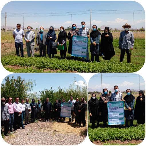 اجرای طرح گسترش باغچه های خانگی و بهبود تغذیه زنان روستایی و عشایری در جلفا