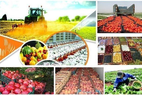 جذب بیش از 5 میلیون تن ماده خام در صنایع کشاورزی فارس