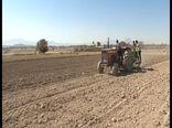 تیران و کرون، بزرگترین قطب تولید موسیر در کشور