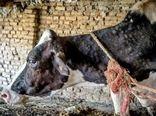 جهت جلوگیری از بیماری لمپی اسکین در شهرستان شهربابک رعایت اصول بهداشتی- قرنطینه ای توسط دامداران ضروری است
