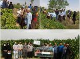 برگزاری روز مزرعه و کارگاه آموزشی- ترویجی برای کشاورزان بویین زهرا