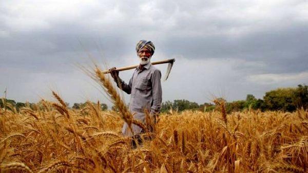 فعالشدن تعاونیها و تشکلها رمز موفقیت کشاورزی در آینده است