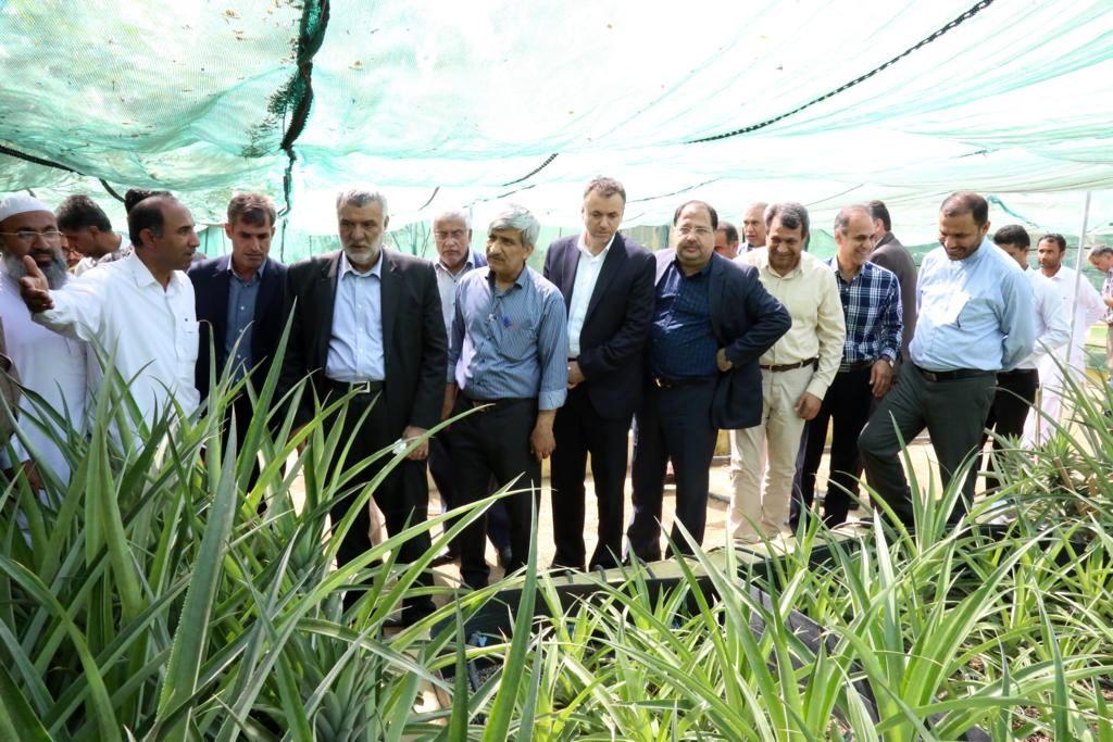 بازدید وزیر جهاد کشاورزی از گلخانه تحقیقاتی پرورش نهال کشت بافتی آناناس در چابهار