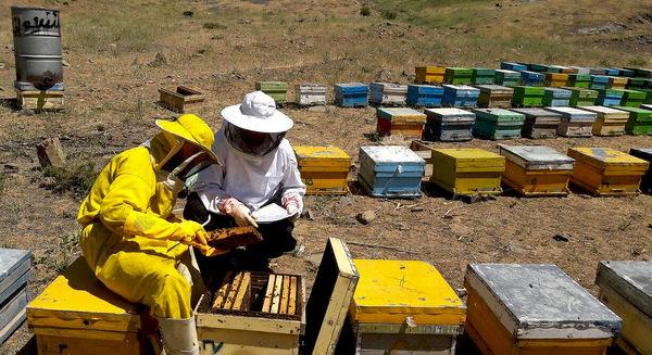 تسهیلات ندهید، از زنبوردار حمایت کنید