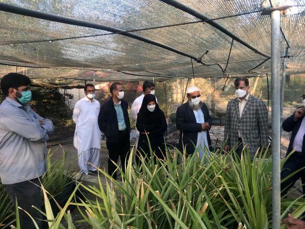 معاون امورباغبانی وزارت جهادکشاورزی وارد سیستان و بلوچستان شد