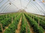 تولید 3500 تن سبزی و صیفی در چهارمحال و بختیاری