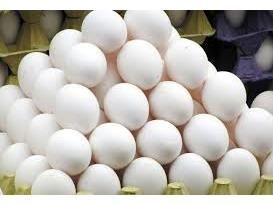 تولید 835 میلیارد تخم مرغ در بابل/ ظرفیت صادرات 1300 تنی