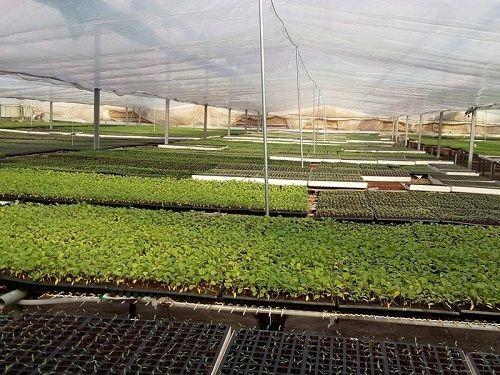 اشتغال۸۰۰ نفری با تولید محصولات گلخانهای خراسانجنوبی