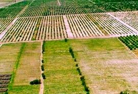 اجرای «کاداستر» گامی برای کاهش اختلافات ملکی کشاورزان