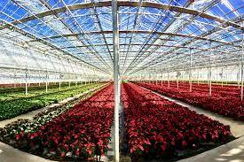 سازمان جهاد کشاورزی اردبیل در احداث گلخانه رتبه نخست کشوری را کسب کرد