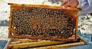 لزوم توجه به فرآوردههای جانبی صنعت زنبورداری در کشور