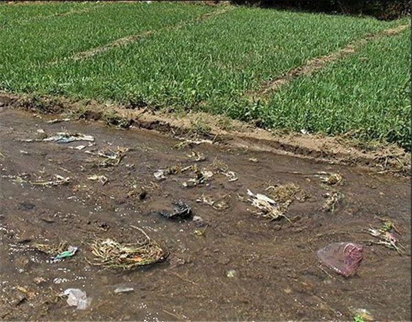 فاضلاب خام برای آبیاری تحویل کشاورز نمیشود