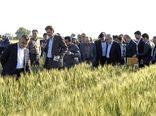 واگذاری ۴ دانش فنی ارقام اصلاحشده زراعی به بخشخصوصی