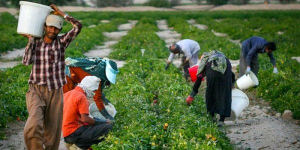 کشاورز نباید از چرخه اقتصادی خارج شود