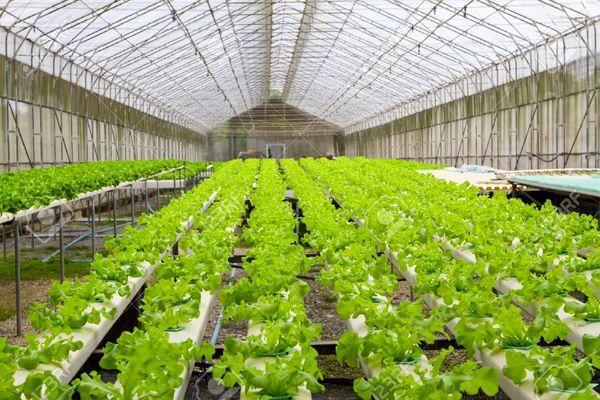 پیش بینی تولید ۲۵ میلیون تن سبزی و صیفی در امسال