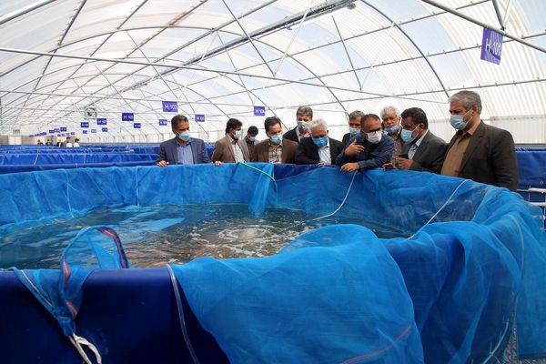 استان یزد پیشرو در پرورش ماهی تیلاپیا