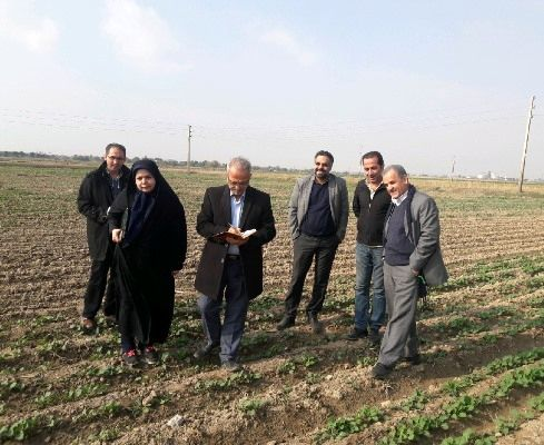 21 درصد سطح مزارع تولید بذر کشور متعلق به استان تهران است