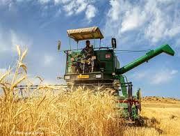 آغاز برداشت مزارع غلات  در شهرستان ایلام