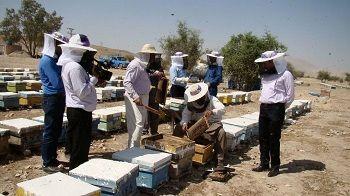 تولید 400 تن عسل در شهرستان فراشبند