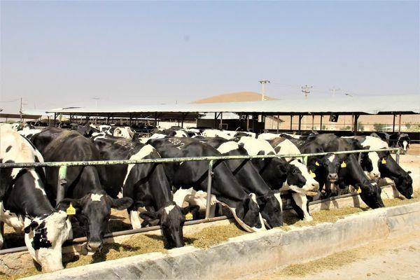 یک سوم درآمد بخش کشاورزی چهارمحال و بختیاری در حوزه دام و طیور است